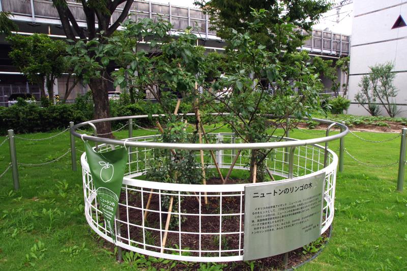 浜松科学館 みらいーら ニュートンのリンゴの木